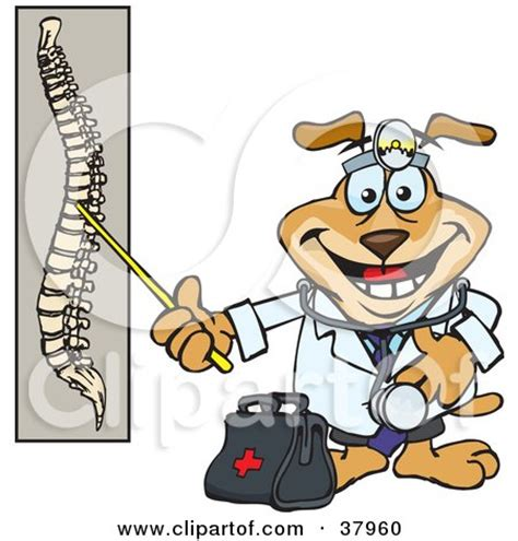 Spinal cord injury research papers